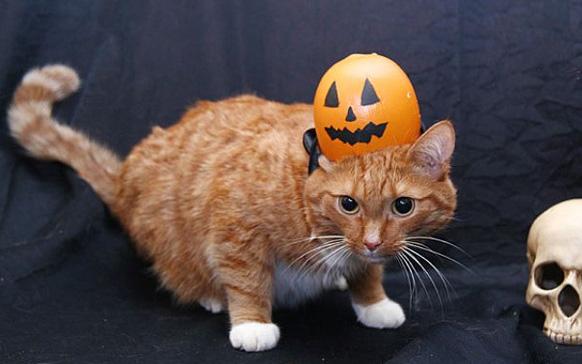 кот с тыквой