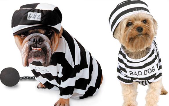 две собаки в костюмах