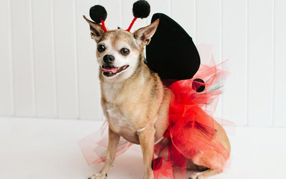 собачка в красном костюме