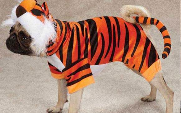 собака в костюме тигра