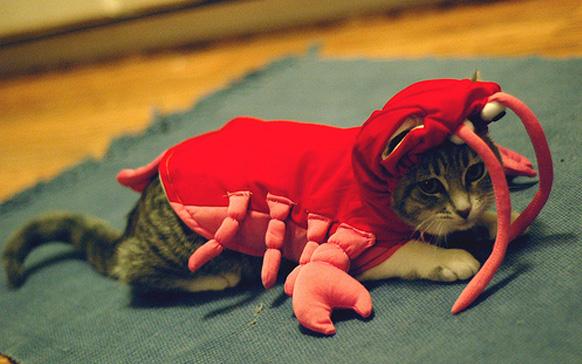 кот и хэллоуин