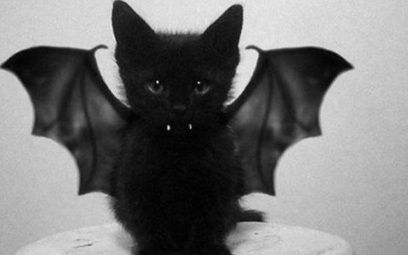 кот в костюме летучей мыши