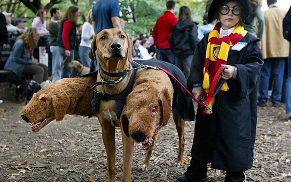 собака в костюме дракона