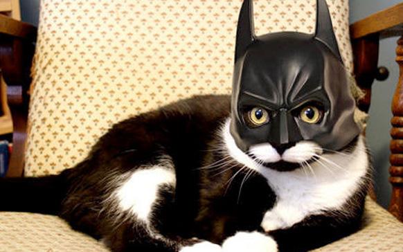 кот бэтмен