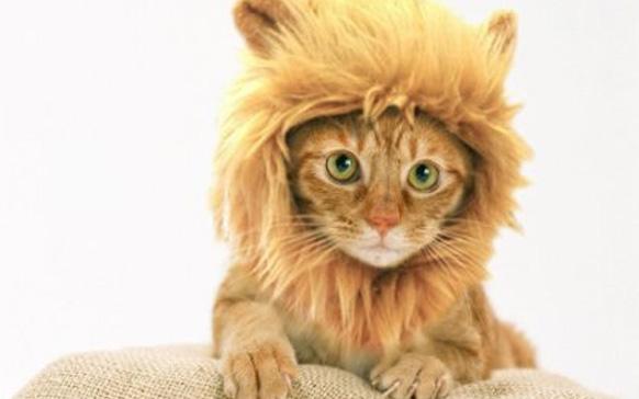 кт в косюме льва