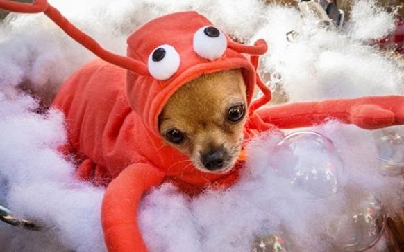 маленький собачка в костюме