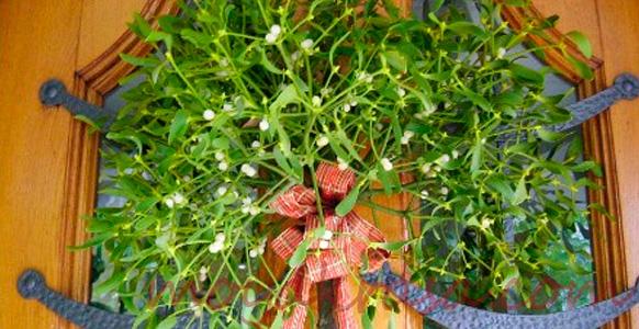 ветки омелы для украшения