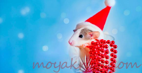 белая крыса в новогодней шапочке