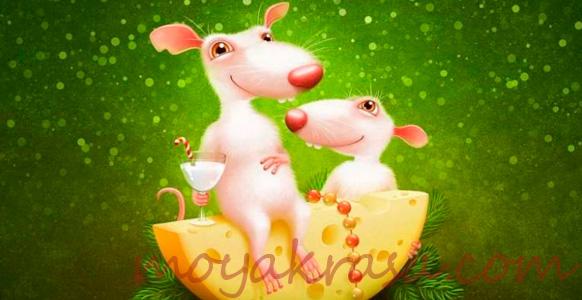 крысы с сыром