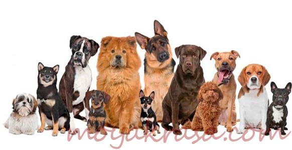 породы и мена собак